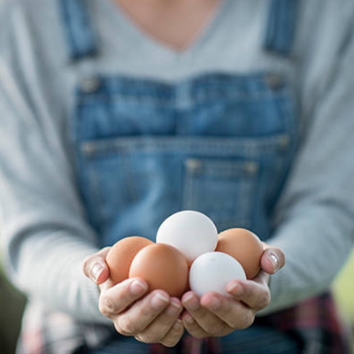 manda-huevos-gelt-dinero